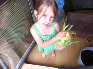 zabawa kukurydzą
